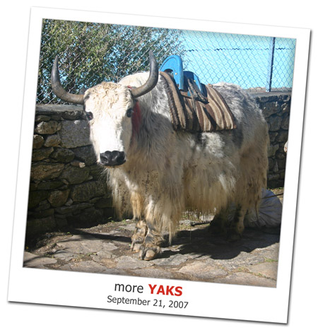 2007.09.21 More Yaks