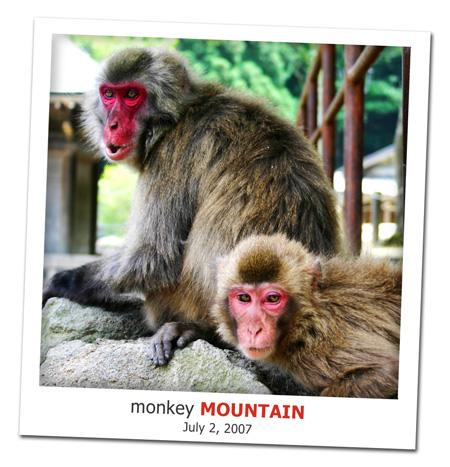 2007.07.02_monkey